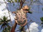Likvidace vosího hnízda